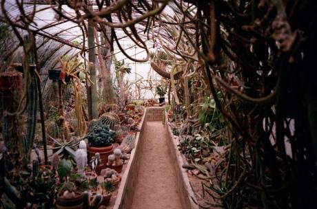 Moorten Garden