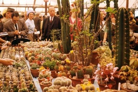 Royal Chelsea Flower Show