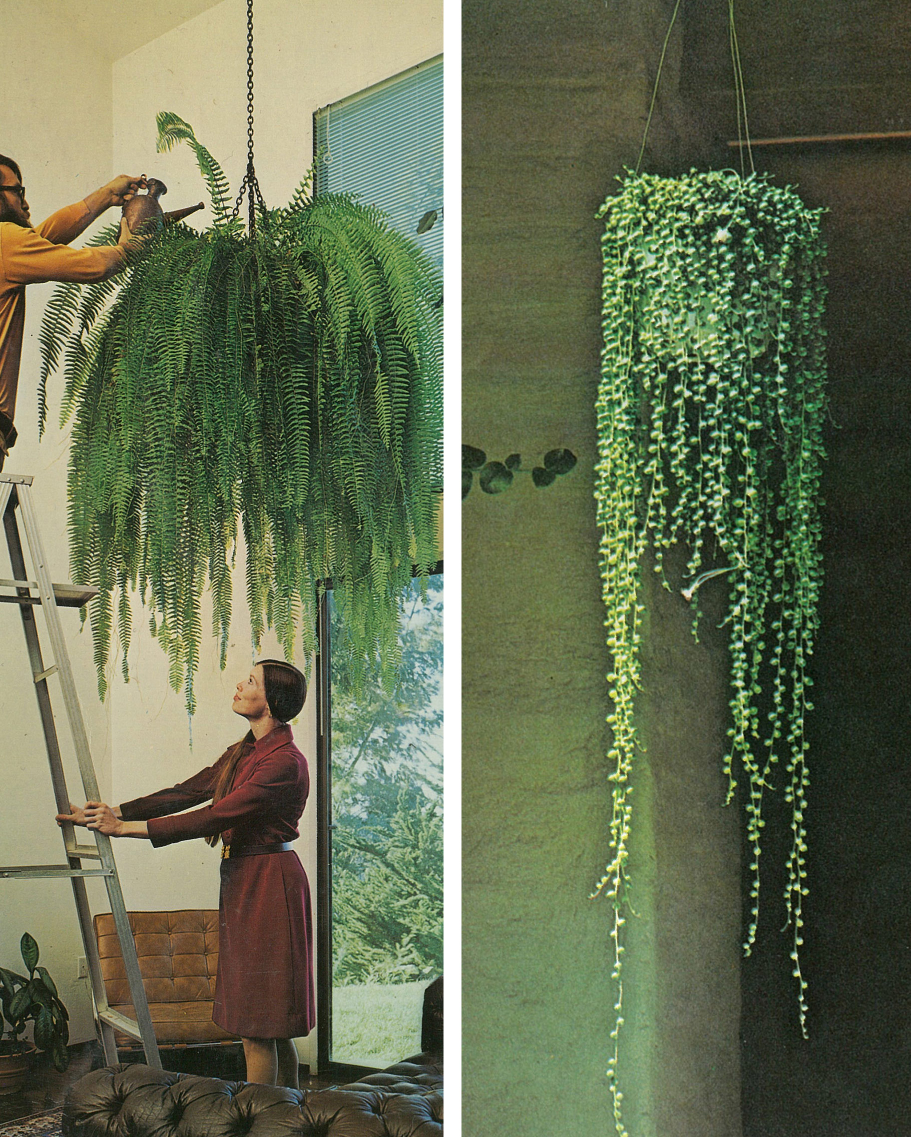 Hanging Plants The Secret Garden