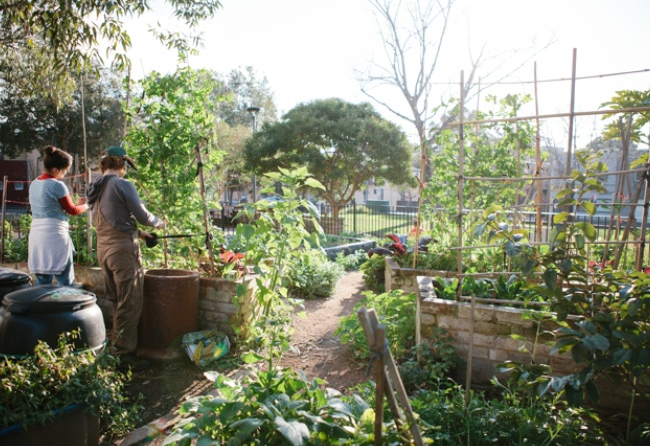 Darlington The Secret Garden