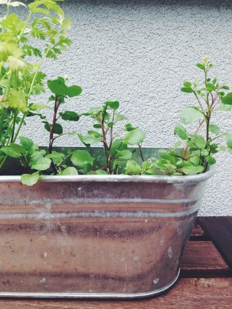 Seats Plant House